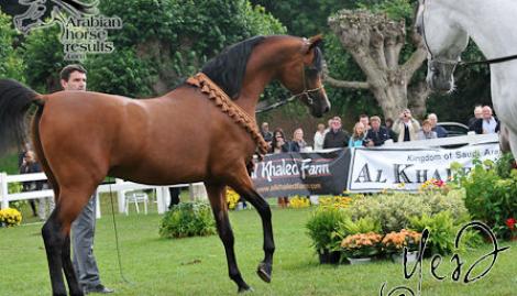 الصور و النتائج التفصيلية   لبطولة كأس (الران) ٢٠١١ لجمال الخيل العربية   بلجيكا ٢٣-٢٤ يوليو ٢٠١١