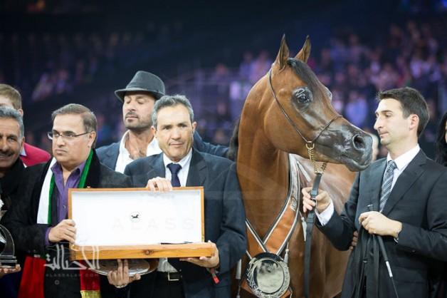 جياد مربط دبي تحقق ثلاث ألقاب ثمينة ببطولة العالم باريس ٢٠١٤ لجمال الخيل العربية الأصيلة