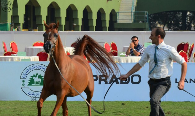 6th Mecca Arabian Horse Championship (Jeddah) Next October