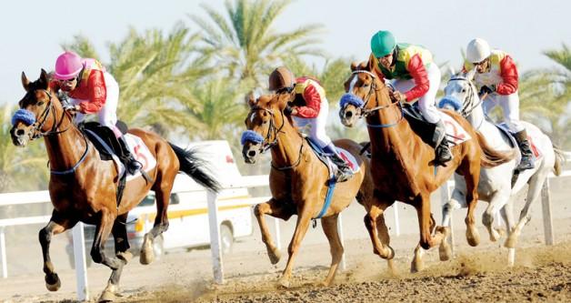 اليوم .. ستة أشواط للخيول العربية الأصيلة وشوطان للمهجنة في سباق بركاء بعمان