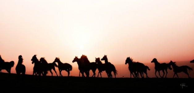 «الزراعة» المصرية تحظر استيراد أو تصدير الخيول للمزارع غير المرخصة
