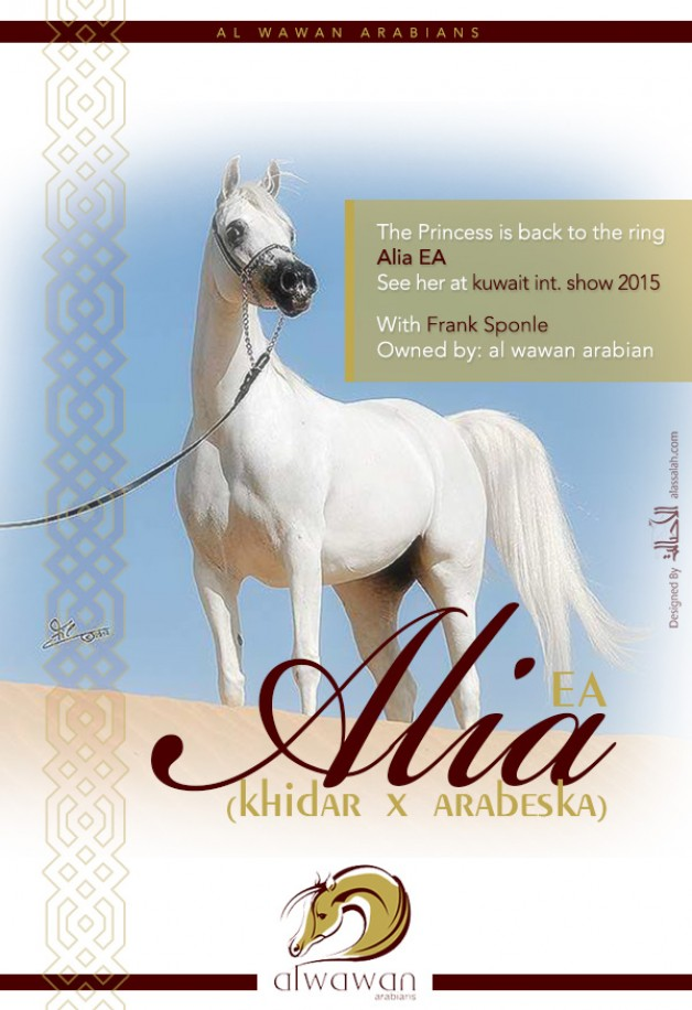 The Princess is back to the ring – Alia EA for al wawan arabians