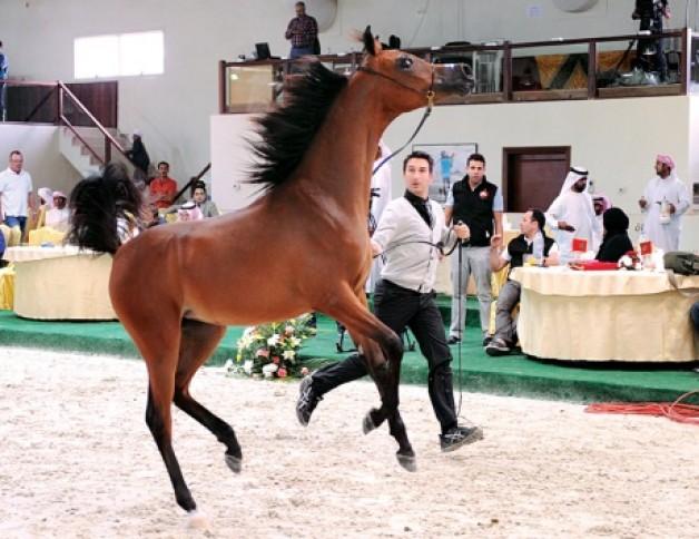 سلطان بن زايد يشهد افتتاح مهرجان الفروسية وبطولة المربين العرب للخيل العربية بالختم