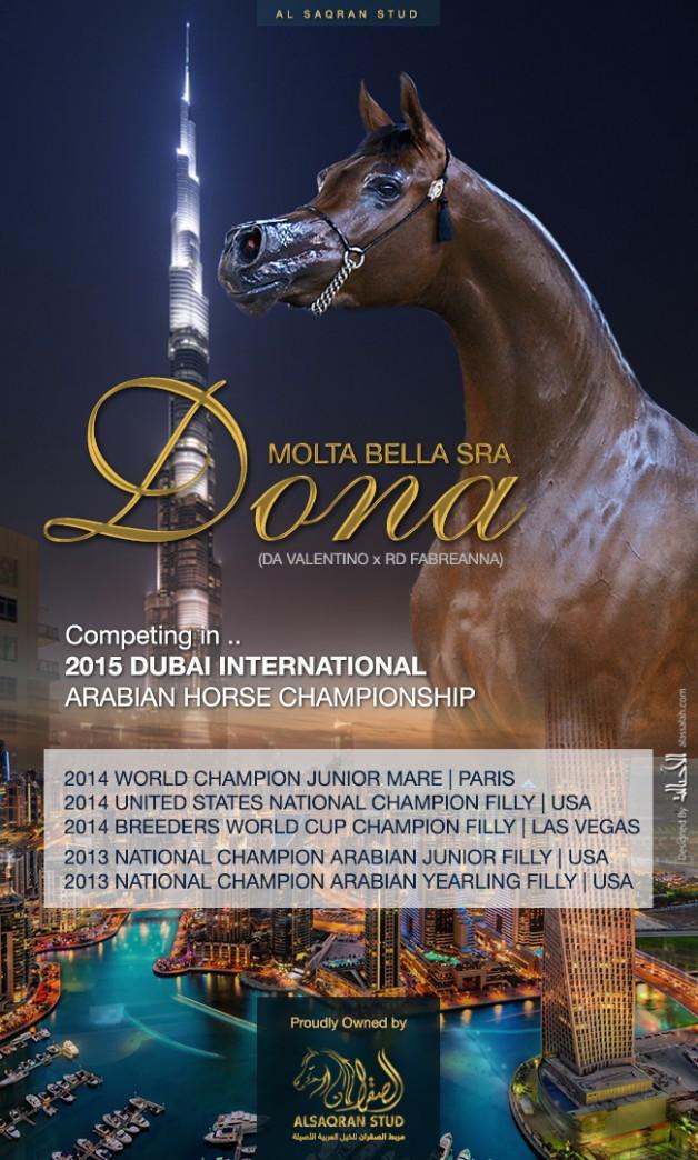 Donna Molta Bella SRA – Competing in DUBAI 2015 CHAMPIONSHIP