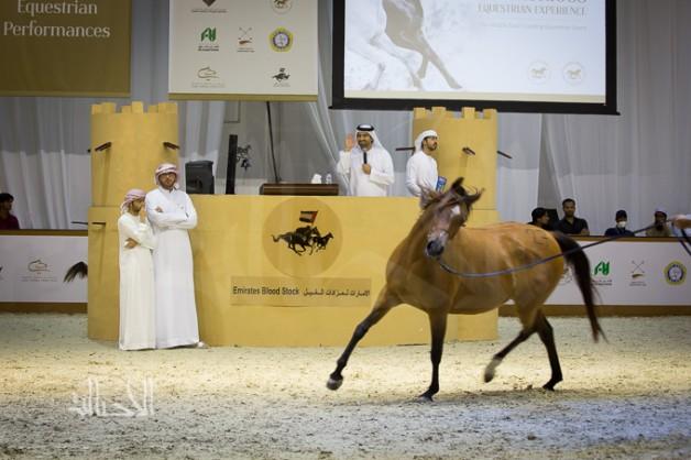 بمزاد الخيل في معرض دبي «الصقران» يقتنص الفرس الأغلى سعراً بمليون درهم