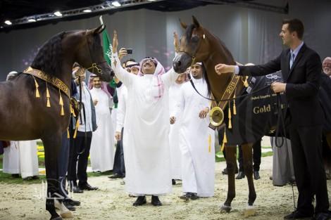 صور مقتطفة من اليوم الختامي لبطولة دبي ٢٠١٥ الدولية للجواد العربي
