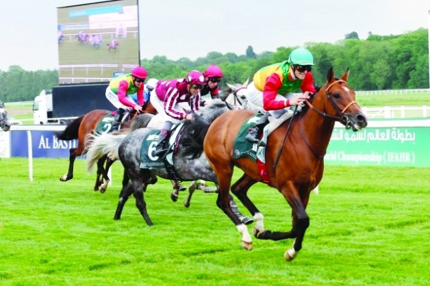 مهرجان منصور بن زايد للخيول العربية يحط الرحال في «لينفيلد»