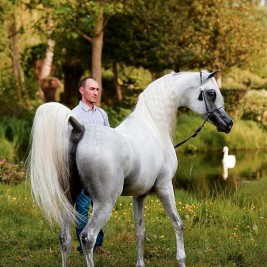 Menton Arabian Horse Show 2015 Results & Pictures