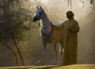 انطلاق فعاليات بطولة عجمان ٢٠١٧ لجمال الخيول العربية الأصيلة غدا والمزاد اليوم