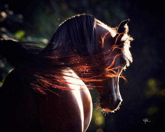 هل ألوان الخيول لها تأثير على سلوكها!