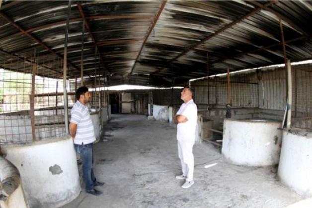 نفوق 9 خيول عربية أصيلة حرقاً بالبحرين بسبب ماس كهربائي