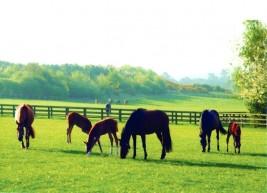 إمبراطورية شادويل رائدة في صناعة وتربية الخيول