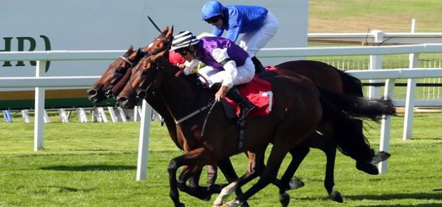 مهرجان منصور بن زايد للخيول العربية يخطف الأضواء في لندن