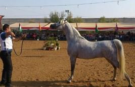 اجتماع تحضيري لبطولة فلسطين الدولية الثالثه لعرض جمال الخيول العربية