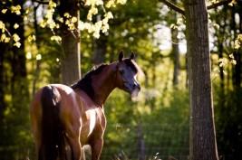 انفلوانزا الخيول .. شديد العدوى وسريع الانتشار!