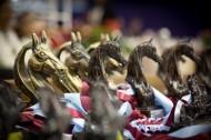 خيول الإمارات تشارك في البطولة الدولية لجمال الخيل بالمغرب