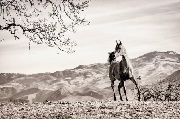 6 نصائح أساسية لضمان صحة الحصان خلال فصل الخريف