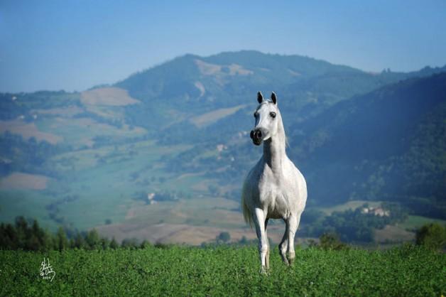 لماذا يفقد حصانك وزنه؟ إليك بعض الأسباب