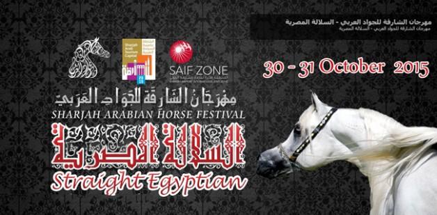 انطلاق مهرجان الشارقة للجواد العربي بالسلالة المصرية غداً
