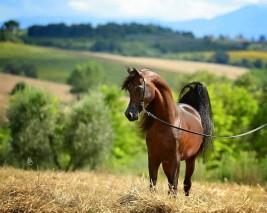 طريقة قياس نبض الخيول