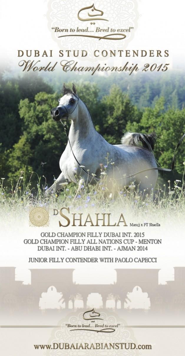 Dubai Stud Paris Contenders 2015 – D SHAHLA