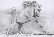 البطولة الدولية لجمال الخيول العربية بفلسطين تنطلق يوم 18 المقبل
