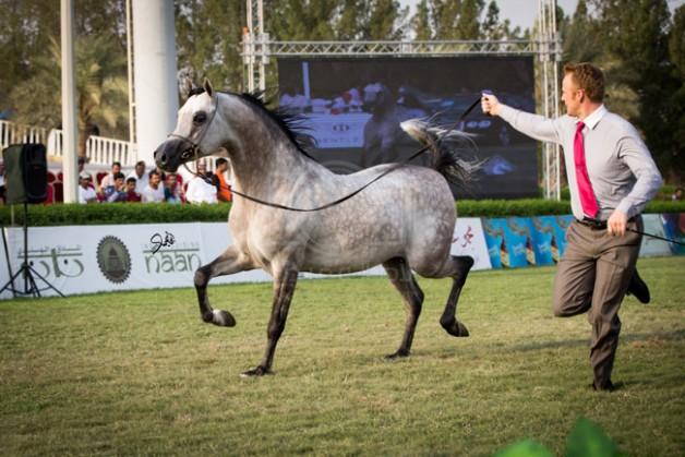 مقتطفات اليوم الختامي من بطولة مكة المكرمة الدولية السادسة بمزرعة الصواري محافظة جدة