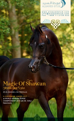 Feel the MAGIC in PARIS | MAGIC OF SHAWAN
