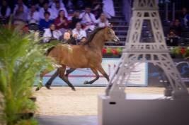 مقتطفات من اليوم الأول لبطولة العالم لجمال الخيل العربية الأصيلة – باريس ٢٠١٥