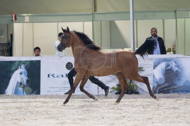 """""""الزراعة المصرية"""": إيقاف مدير محطة الزهراء للخيول عن العمل وإحالته للنيابة للإضرار بالمال العام وتزوير في انساب الخيل"""