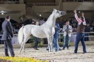 «الزراعة المصرية» تستعد لتنظيم مهرجان الخيول العربية بالزهراء.. 17 نوفمبر