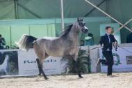مؤتمر صحفي لعرض الفرص الاستثمارية في مجال تصدير الخيول بمصر .. اليوم