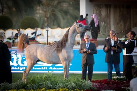 مقتطفات من اليوم الأول لبطولة مركز الملك عبدالعزيز الدولية الثانية لجمال الخيل العربية