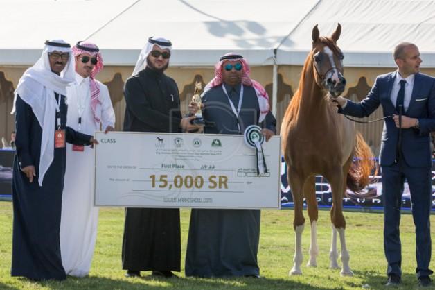 نتائج فئات اليوم الثاني من بطولة مركز الملك عبدالعزيز الدولية الثانية لجمال الخيل العربية الأصيلة