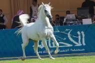 مقتطفات من اليوم الثاني لبطولة مركز الملك عبدالعزيز الدولية الثانية لجمال الخيل العربية