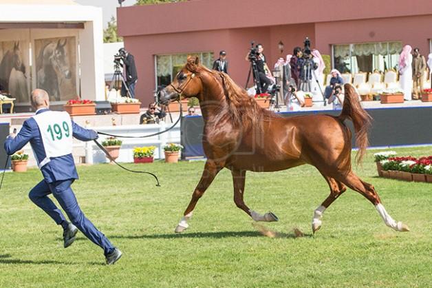 «البيئة والمياه» تطلب مرئيات المهتمين بأنشطة الفروسية للخيول العربية حول لائحة العقوبات