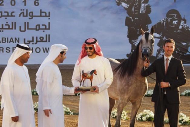 «الزبير» و «دبي» و «الأريام» و «الخزنة»  أبطال (عجمان) ٢٠١٦ لجمال الخيل العربية الأصيلة – النتائج