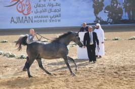 تنطلق اليوم بطولة عجمان ٢٠١٨ لجمال الخيل العربية الأصيلة