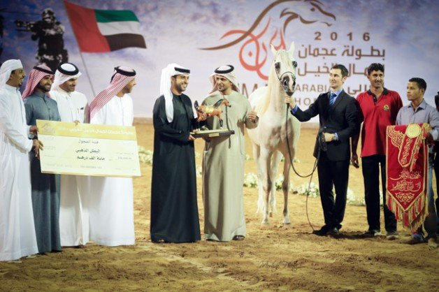 مقتطفات من بطولة عجمان للخيول العربية الأصيلة ٢٠١٦