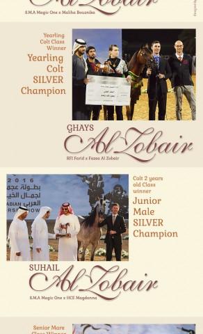 Al Zobair Stud Achievements in  Ajman 2016 Championship