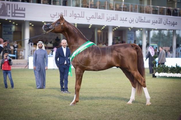 «بنقا» و «ابها قطر» يسجلان أعلى نقاط البطولة ويتأهبان لمعترك ألقاب الأفراس والأفحل غداً ببطولة الأمير سلطان العالمية – نتائج