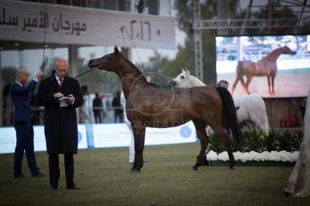 مهرجان الأمير سلطان بن عبدالعزيز العالمي للجواد العربي 2019 ينطلق اليوم الاربعاء –الجدول الزمني