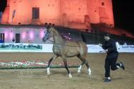 انطلاق بطولة الفجيرة الأولى لجمال الخيول العربية و«دبي» و «البداير» الأكثر تأهلاً للنهائيات