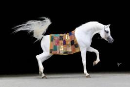 هل تستطيع الخيول التقاط إيماءات البشر؟