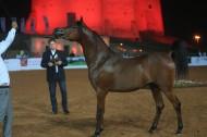 صور مقتطفات اليوم الثاني من بطولة الفجيرة الأولى لجمال الخيول العربية