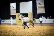 ٧،٥ مليون درهم اجمالي مبيعات مزاد دبي للخيول المصاحب لبطولة دبي الدولية ٢٠١٦