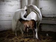 5 Tips for Feeding Lactating Mares