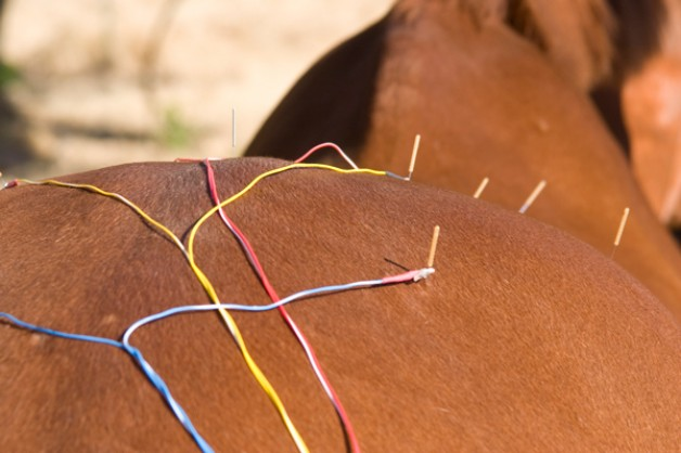 Applying Acupuncture to Lameness in the Horse
