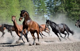 Group or Individual Horse Housing: Which is Less Stressful?