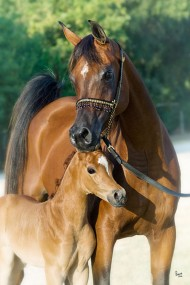 Do Equine Genetics Influence Behavior?